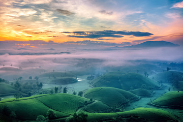 Canvas Prints Green blue Overview of Long Coc green tea hill, Phu Tho, Vietnam.