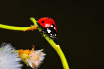 Photo sur Aluminium Papillon Beautiful ladybug on leaf defocused background