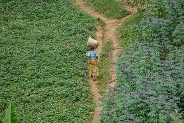 Woman walking among sown fields near Karongi, Kibuye, Rwanda.