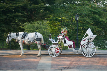 Central Park Buggy