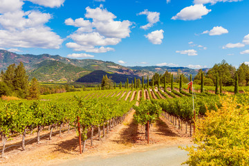 Spoed Fotobehang Wijngaard Vineyards in Napa Valley California USA