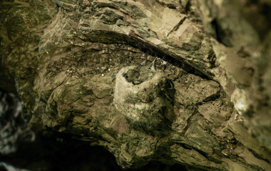 Hummingbird chicks in nest inside a rock cave - Mount Leones - Dina Huapi - Bariloche - Argentina