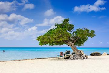 Aruba, Netherlands Antilles. Divi divi tree on the beach.