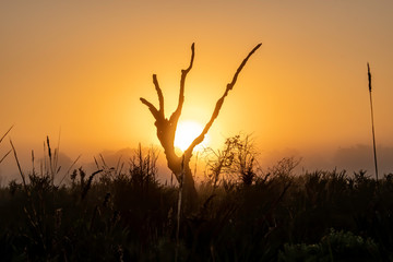 Photo Stands Melon Foggy morning in the Florida wilderness as the sun rises behind a tree