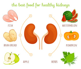 The best food for healthy kidneys. Information banner on the topic of diets and healthy eating. Vector infographics. Illustration with the image of kidneys and products in cartoon style.