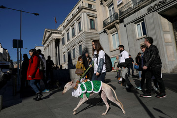 "Dog in costume takes part in the ""Sanperrestre"" walk to raise awareness about the need to adopt dogs and cats instead of purchasing them, in Madrid"