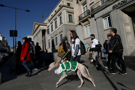 """Dog in costume takes part in the """"Sanperrestre"""" walk to raise awareness about the need to adopt dogs and cats instead of purchasing them, in Madrid"""