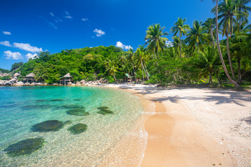 Wall Mural - beach and coconut palm trees. Koh Tao, Thailand