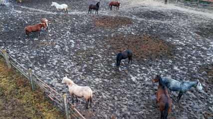 The herd of horses walks in corral after the rain. Aerial view. Animal and countryside concept.