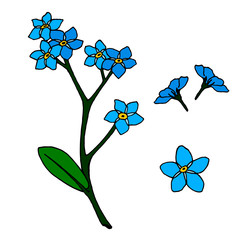 A set of blue flowers forget-me-nots.  Isolated elements on white background for your design.