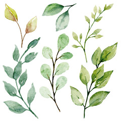 Leaves watercolor set. Hand painting floral illustration. Green leaf, plants, foliage, branches isolated on white background.