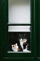 Cute black and white cat sitting on windowsill, looking out curi