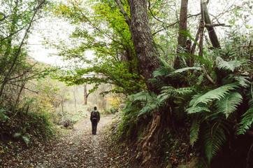 Man walking in jungle with lush vegetation