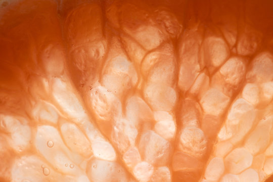 Ombre slice of citrus that shows cells and bubbles inside.