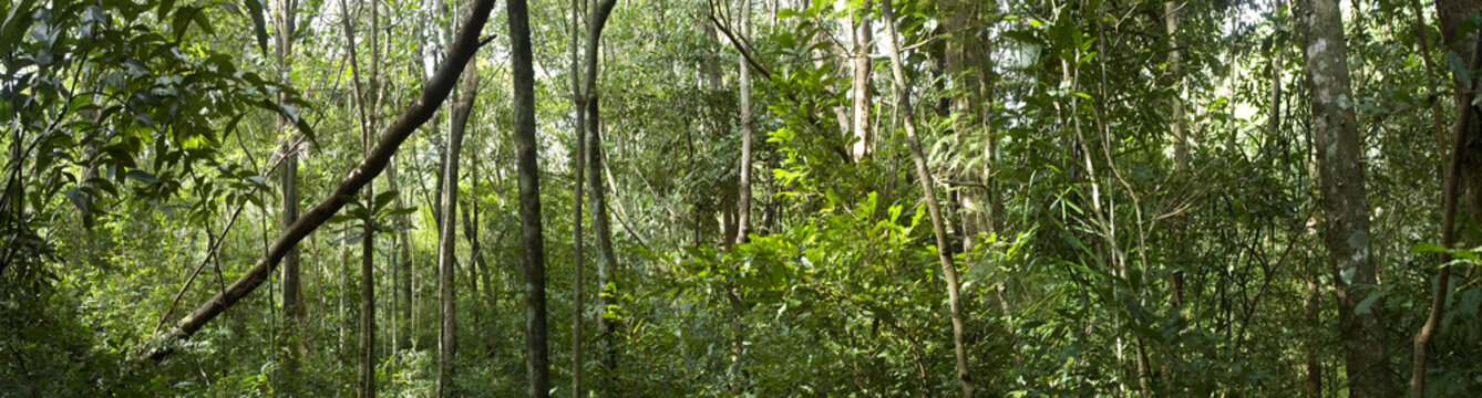 Biodiversity in a dense tropical forest