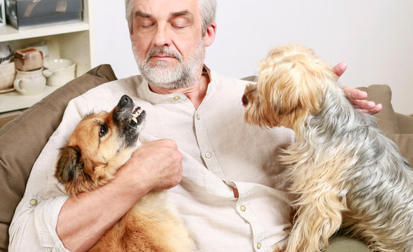 Dog growls at another dog. Man tries to calm down the dog.