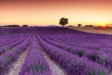 Papiers peints Prune Provence, France. Lavender fields on the Plateau of Valensole.