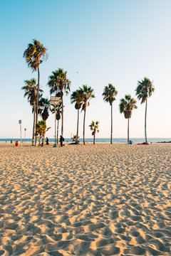 Palm trees on the beach, in Venice Beach, Los Angeles, California