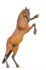 horse rearing kick in a white background