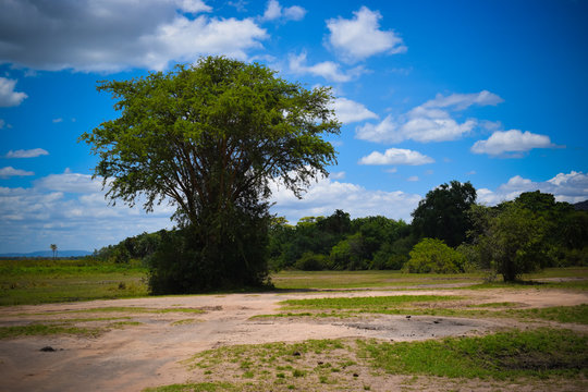 landscape background images from Africa in Akagera National park