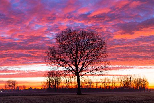 single tree at sunrise winter