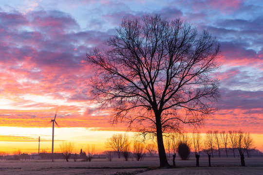 outline of tree in front of colourfull sunrise