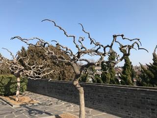 Crispated Branch of Tree