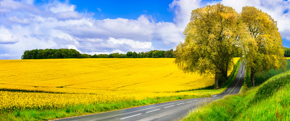 beauty in nature . Beautiful countryside of France. Blooming yellow rape fields and arch tree on the road.