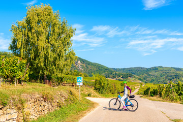 Woman cyclist on road along vineyards to Hunawihr village, Alsace Wine Route, France