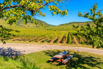 Picnic table in park along cycling road and vineyards near Kaysersberg village, Alsace Wine Route, France