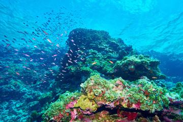 Foto auf Gartenposter Riff Beautiful coral reef