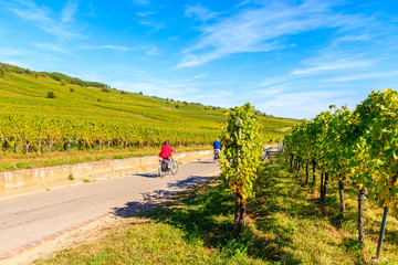 Couple of unidentified tourists cycling on road along vineyards near Riquewihr village, Alsace Wine Route, France