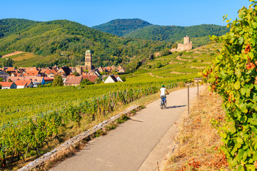 Young woman cycling on road along vineyards from Riquewihr to Kaysersberg village, Alsace Wine Route, France