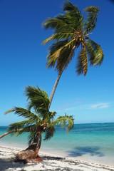 Foto op Plexiglas Asia land Karibik Palmen Beach