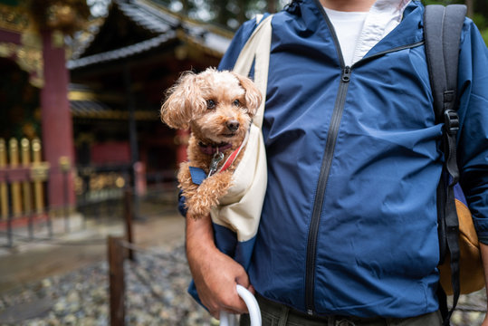 A dog with owner in Nikko