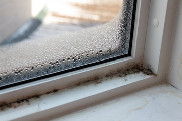 Moist mold and fungus in window and frame