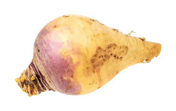 fresh rutabaga vegetable root cutout