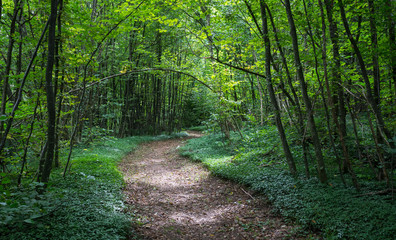 Foto auf Leinwand Straße im Wald Green pathway through forest illuminated with sunlight