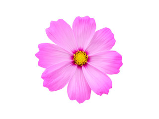 Fond de hotte en verre imprimé Univers Pink cosmos flower on white background.