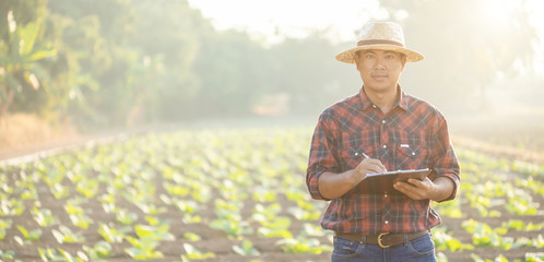Foto auf Acrylglas Gelb Schwefelsäure Asian young farmer or academic working in the field of tobacco tree