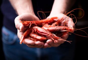 Fisherman Mazara del vallo holding fresh prawn isolated on black background.