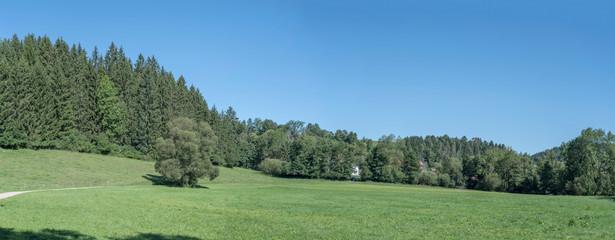 Spoed Foto op Canvas Olijf green Heimbach valley, near Betzweiler, Black Forest, Germany