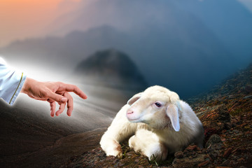 Deurstickers Schapen Jesus hand reaching out to a lost sheep