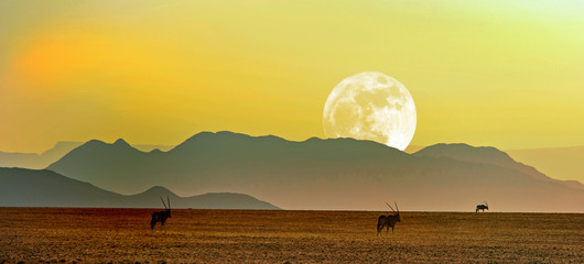 Gemsbok Oryx silhouette walking across the Namib Naukluft National Park at dusk with a full moon