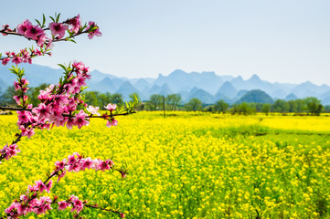Self adhesive Wall Murals Yellow The field of yellow flowers