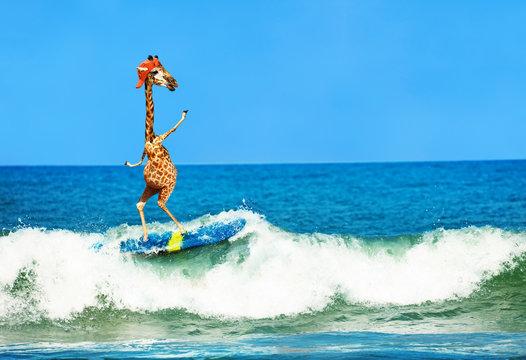 Giraffe wear cap surf on surfboard in sea waves