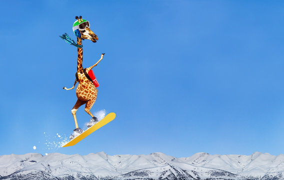 Happy giraffe snowboarder jump high over mountains