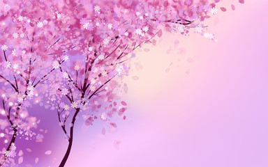 Wall Murals Purple Pink blossom trees with flowers