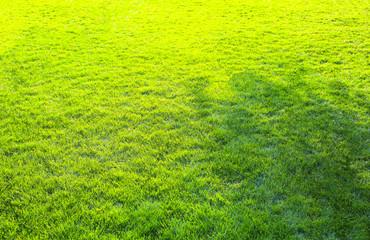 Foto auf Acrylglas Gelb Green grass texture background. Spring season.