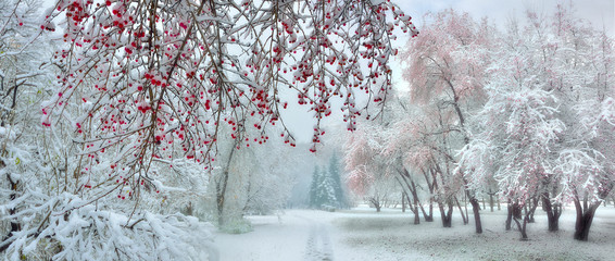 Garden Poster Dark grey Winter city park at snowfall with red wild apple trees